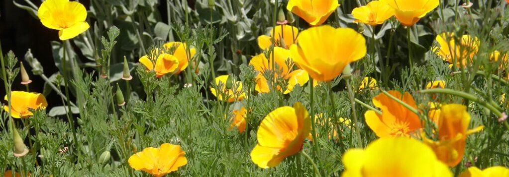 flora del Parco Naturale Alta Valsesia