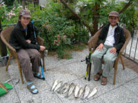 Sesia river great fishing week