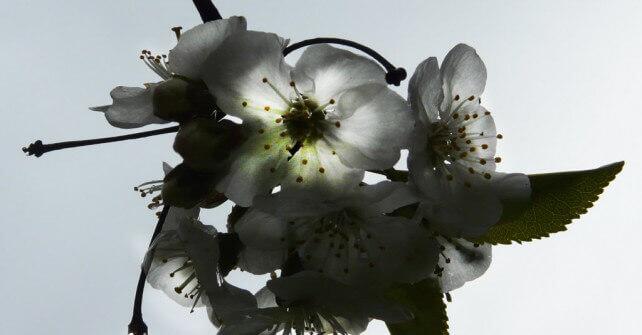 Benvenuta Primavera. Offerte per le ultime settimane bianche 2016